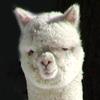 nappkin userpic