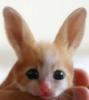 кролякот