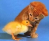 cat&duck