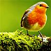 spring [peacebloomings], birdy