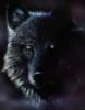spellwolf userpic