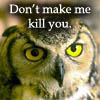 owl-don't make me kill you