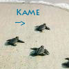 kame_chan07 userpic