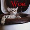 Rowan aka: The Seticat: cat - woe-cat - cluegirl