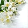 edelweiss_fleur userpic
