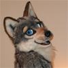 terkwolf