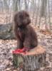 puppy stumping