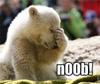 Icebear n00b