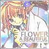 [Sakura] a beautiful flower