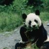 panda_bono userpic