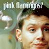 Dean - pink flamingos?