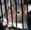 jailed hamster