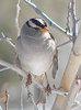 alan - winter bird