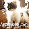 Jamalyn: Stargate Cat