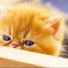 Kitten; B<