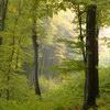 kribu: Viini mets