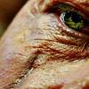 Amanda: locke scar