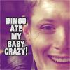 theseeker8507: Dingo