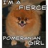I'm THE fierce pomeranian girl