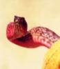 chokemylove userpic