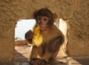 justinbarba: Monkey