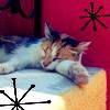 pixiequeen10thk: cat
