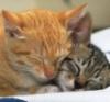 worst-case-scenario girl: kitty snuggle