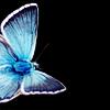 aliora userpic