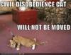 Civil Disobedience Cat