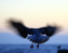 _mouette_ userpic