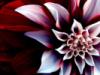 ideas_abound userpic