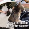 Rowan aka: The Seticat: cat - batcountry - dementia