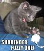 Surrender Fuzzy One