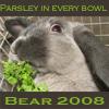 Bear 2008