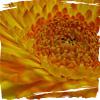 kj415 userpic