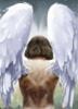 Male Angel (Ангел мужского пола)