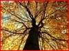 mythicsagefire userpic