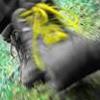aardvark179