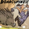 boarcupines