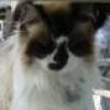 catwomandiana userpic