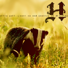 inkvoices: hp:hufflepuff badger