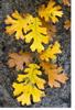 Jodi: autumn