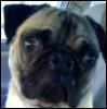 puggyface userpic