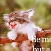 п-ц котенку