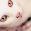 argentum_m userpic