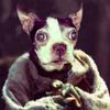 NH: Pets: Cornholio Yoda
