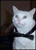 mugglegato: gato