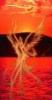 phoenix, sunset