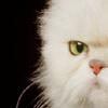 massagecat userpic