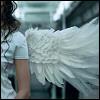 Wings